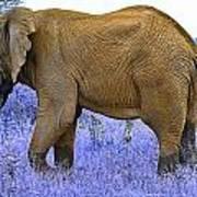 Styled Environment-the Modern Elephant Bull Art Print
