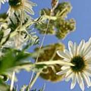 Summer Flowers And Sky Art Print