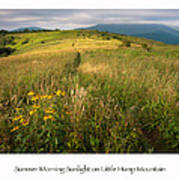 Summer Morning Sunlight On Little Hump Mountain Art Print