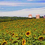Sunflower Field New Jersey Art Print