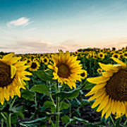 Sister Sunflowers Art Print
