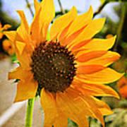 Sunflower With Texture Art Print