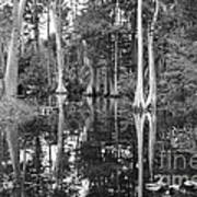 Swampland Art Print
