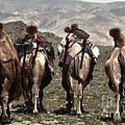 Working Camels Art Print