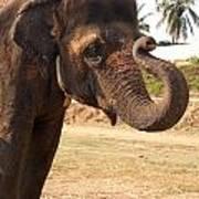Temple Elephants Maharaja's Palace India Mysore Art Print