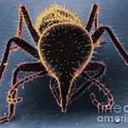 Termite Soldier Art Print by David M. Phillips