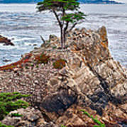 The Famous Lone Cypress Tree At Pebble Beach In Monterey California Art Print
