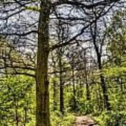 The Forest Path Art Print by David Pyatt