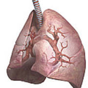 The Lungs Art Print