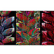 The Many Faces Of Heliconia  Art Print