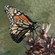 The Monarch Painterly Art Print