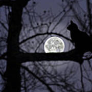 The Moon Watcher Art Print