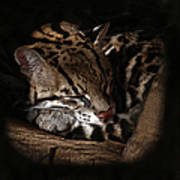 The Ocelot Art Print