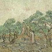 The Olive Orchard Art Print