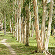 The Path Between The Trees Art Print