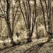 The Spring Forest Art Print