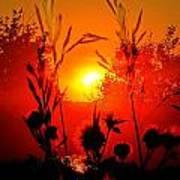 Thistles In The Sunset Art Print
