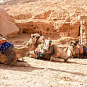 Three Camels Art Print