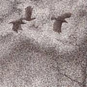 Three Crows Art Print