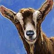 Toggenburg Goat On Blue Art Print
