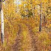 Trail In Golden Aspen Forest Art Print