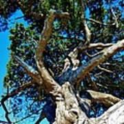 Tree Climbing Paradise Art Print