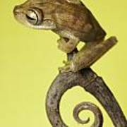 Tree Frog On Twig In Background Copyspace Art Print