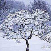 Tree Frosting Art Print