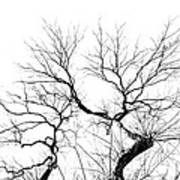 Tree Impression #11 Art Print