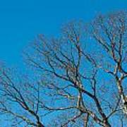 Tree Profile Art Print