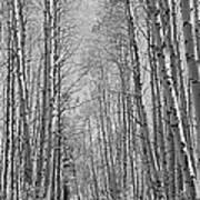 Trees Along A Road, Log Cabin Gold Art Print