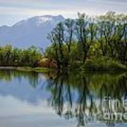 Trees And Lake Art Print