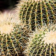 Triple Cactus Art Print