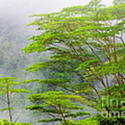 Tropical Forest, Seychelles Art Print