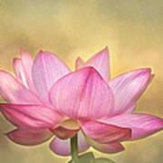 Tropical Lotus Flower Art Print