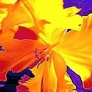 Tulip 6 Art Print
