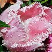 Tulip Lace Art Print by Felicia Tica