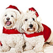 Two Cute Dogs In Santa Outfits Art Print