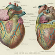 Two Views Of The Heart, With  The Parts Art Print