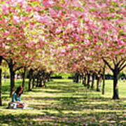 Under The Cherry Blossom Trees Art Print