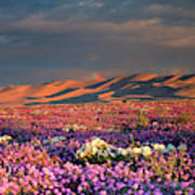 Usa, California, Dumont Dunes Art Print