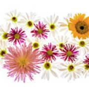 Variety Of Flowers Against White Art Print