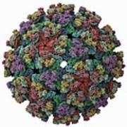 Vee Equine Encephalitis Virus Capsid Art Print by Science Photo Library