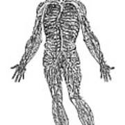 Vesalius: Venous System Art Print