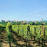 Vineyard, Alsace, France Art Print