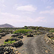 Vineyard On Lanzarote Art Print