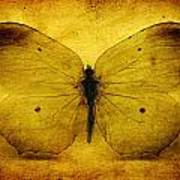 Vintage Grunge Butterfly Art Print