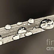 Water Drops On Grass Blade Art Print