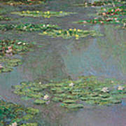 Water Lilies   Nympheas Art Print