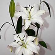 White Lily Spray Art Print